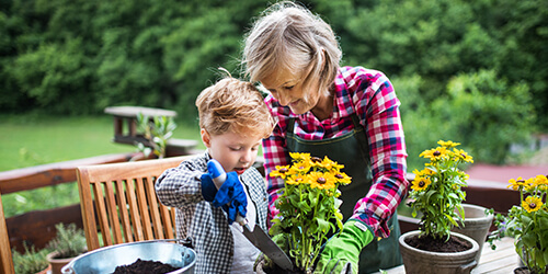 Grandmother in plaid shirt, apron and gardening gloves holds flower pot still for young grandson as he plants yellow flowers